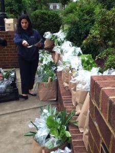 FACSAP Organizers prepare the harvest for members